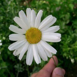 Mythenjagd (1): Bio bedeutet ungespritzt