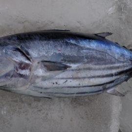 Mythenjagd (5): Die Meere sind überfischt