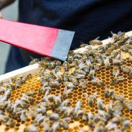 Nur Bio-Pestizide dürfen Bienen töten!