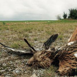 Warum die Energiewende Wildtiere bedroht und Wälder zerstört