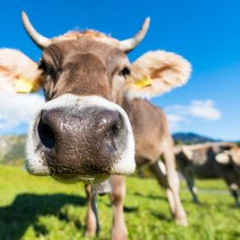 Essen mit Ellen (13) Babies stillen, Kühe killen: Wie wir alle verrückt geworden sind