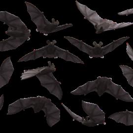 Fledermäuse gibt es gar nicht