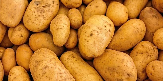 Wir brauchen die Kartoffelwende!