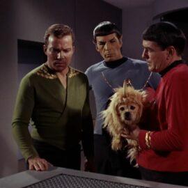 Captain, wir haben ein Arroganz-Problem!